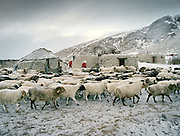 "The sheep herd returns in the evening..Campment of the ""second"" Sary Tash. Ustad's Ghulam's camp..Winter expedition through the Wakhan Corridor and into the Afghan Pamir mountains, to document the life of the Afghan Kyrgyz tribe. January/February 2008. Afghanistan"