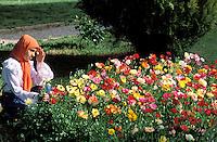Bagh e Eram - Persian garden - Shiraz - Iran