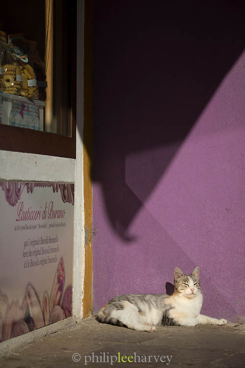Cat and shop front detail, Burano, Cenice, Italy, Europe