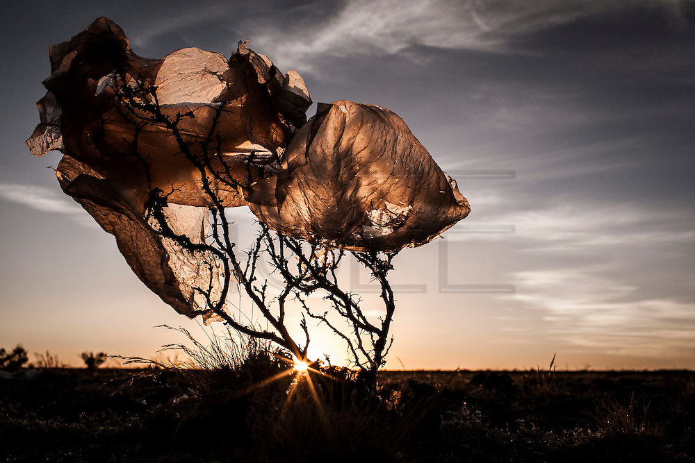 08/11/2014 - Uyuni, Bolivia:Plastic tree #65. Plastic bags are part of the landscape of the Bolivian Altiplano. The accumulation of plastic bags on the environment cause deterioration of the landscapes and agriculture soils and it is associated to the death of domestic and wild animals.