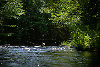 Fly fisherman fishing the pocket water on the trophy stretch of the upper Connecticut River