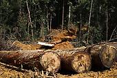 Borneo Stripped Bare