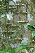 Rain forest tree designs, Costa Rica Costa Rica