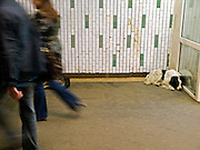 "Homeless dog living at the Moscow subway station called ""Proletarskaya""."