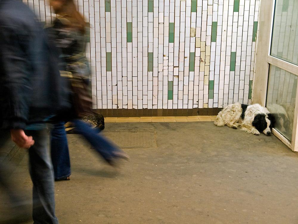 "Homeless dog living at the Moscow subway station called ""Proletarskaya""."