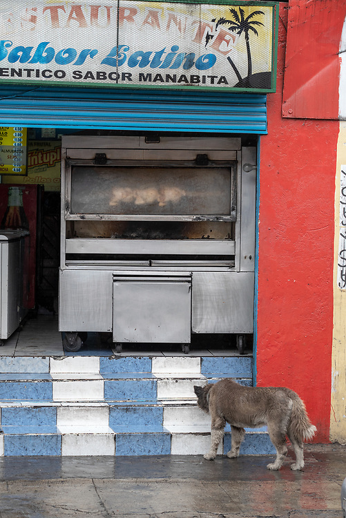 Dog smelling the steps of restaurant with rotisserie chicken, Quito, Ecuador.