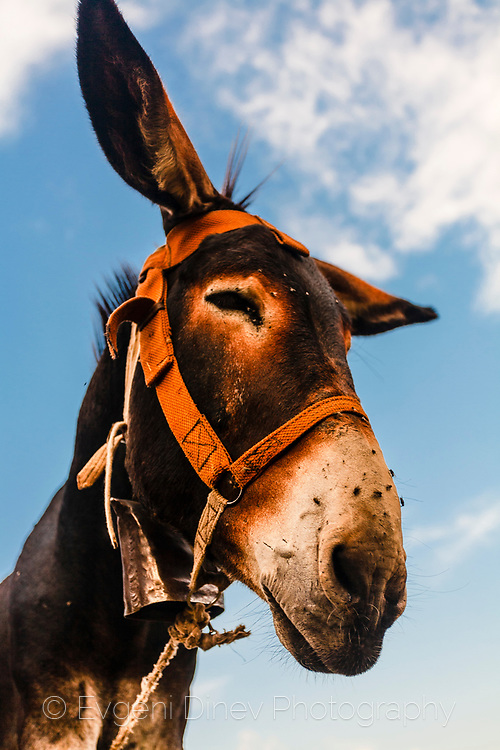 A close-up view of a donkey head