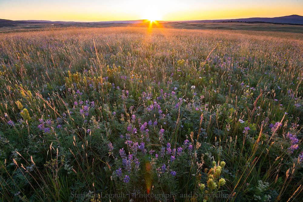 Sunrise, Bellevue Prairie, Waterton Lakes National Park