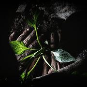 Wegwarte, Koblach, Vegetables, The big inspiration, Familie Grabher, Peter Grabher, cultivation of plants without any non-natural ingredient, Bio, Gemüsebauer, Gemüse, Austria