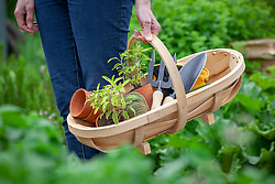 Carrying a wooden trug with gardening tools and sage plants