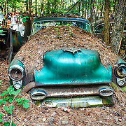 An old blue sedan is almost totally covered in pine needles and other forest debris after being abandoned at the Old Car City junkyard in Georgia.