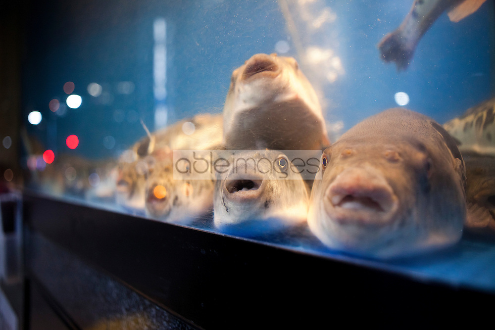 Fish Tank with Puffer Fish