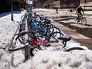 21 APRIL 2018 - MINNEAPOLIS, MN: Bikes in a snowbank on the University of Minnesota campus in Minneapolis.  PHOTO BY JACK KURTZ