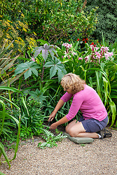 Hand weeding a border with a hand fork