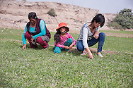 Lima, Peru. Jicamarca. Teresa Sedano Unocc  with her younger sister and mother working in the private (for public green) outside the home