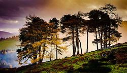 A group of trees on a hillside near Broughton in the Scottish Borders lit in misty autumn sunshine<br /> <br /> (c) Andrew Wilson | Edinburgh Elite media