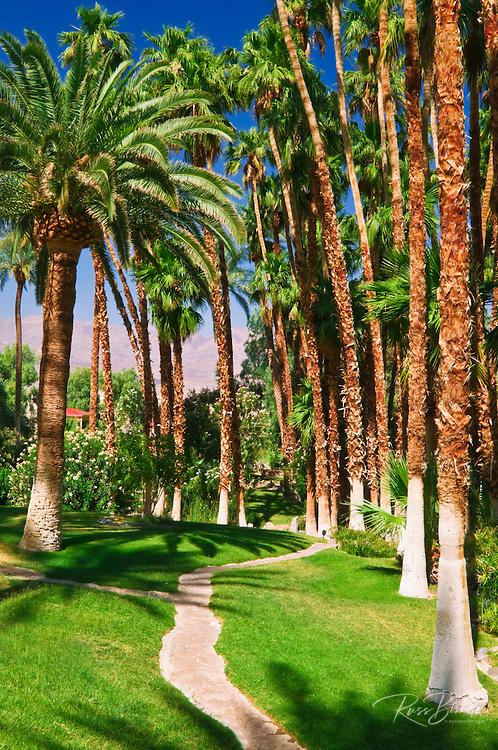 Palms and path at Furnace Creek Inn, Death Valley National Park. California