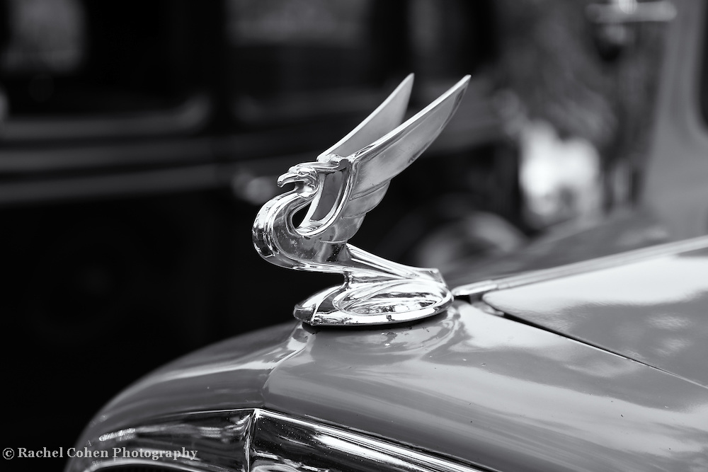 """""""1934 Flying Eagle""""<br /> <br /> Vintage 1934 Chevrolet hood ornament in a classic monochrome!!<br /> <br /> Cars and their Details by Rachel Cohen"""