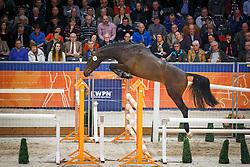 114 - <br /> KWPN Stallion Selection - 's Hertogenbosch 2014<br /> © Dirk Caremans