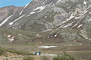 Cyclists head down the Park Road from the Eielson Visitors Center in Denali National Park Alaska. Denali National Park and Preserve encompasses 6 million acres of Alaska's interior wilderness.