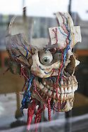 model of a head at a medical museum in Cairo that is used for students in medical school