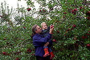 Father and son picking apples at a Upstate New York U Pick It Farm.