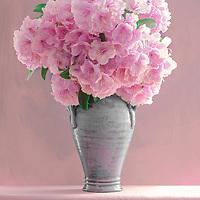 Rhododendron - Irish Wildflower Series I