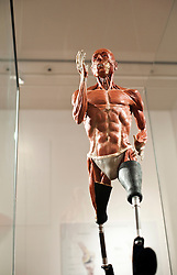 © Licensed to London News Pictures. 12/03/2012. London, UK. A model of sprinter Richard Whitehead, made by Richard Neave and Denise Smith. The model is anatomically correct and is designed to show the difference in physiology of an athlete that uses prosthetic limbs.Preview of the Royal College of Surgeons' 'Anatomy of an Athlete' exhibition. The exhibition opens on March 13 and looks at the latest innovations in orthopaedic surgery, prosthetics and training in creating and maintaining elite athletes. Photo credit : Spike Johnson/LNP