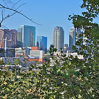"""A shot of the Bellevue skyline thru the trees, using a """"rearward"""" look at the eastside skyline."""