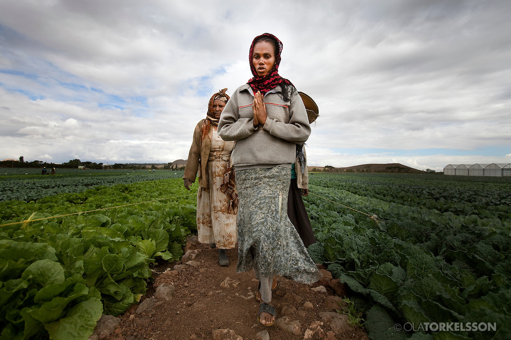 Ethiopia is becoming a huge larder in<br /> the hands of Indians, Americans and Saudis. To name a few.<br /> The Ethiopian government awards the country's arable land and water resources to the highest bidder. Investors from around the world rent parts of the most fertile areas in the country. Ethiopia has become a pawn in a giant Monopoly game<br /> Land Grab is a global phenomenon, a heavy trend which is expected to accelerate in the coming century. When food prices soared in 2008, it cause riots in some sixty countries. To<br /> buy and cultivate land is green power, an insurance against future<br /> instability. At least in the countries where the food is exported.<br /> But what are the implications for the<br /> population that previously cultivated local crops or used the earth<br /> to pasture?