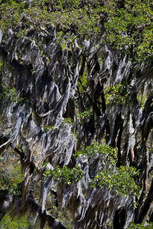 Venezuela_VEN, Venezuela...Detalhe de uma rocha com musgos na Venezuela...Detail of a rock with mosses in Venezuela...Foto: JOAO MARCOS ROSA / NITRO
