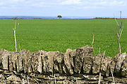 A solitary tree is standing near Rievaulx, Yorkshire, England, United Kingdom.