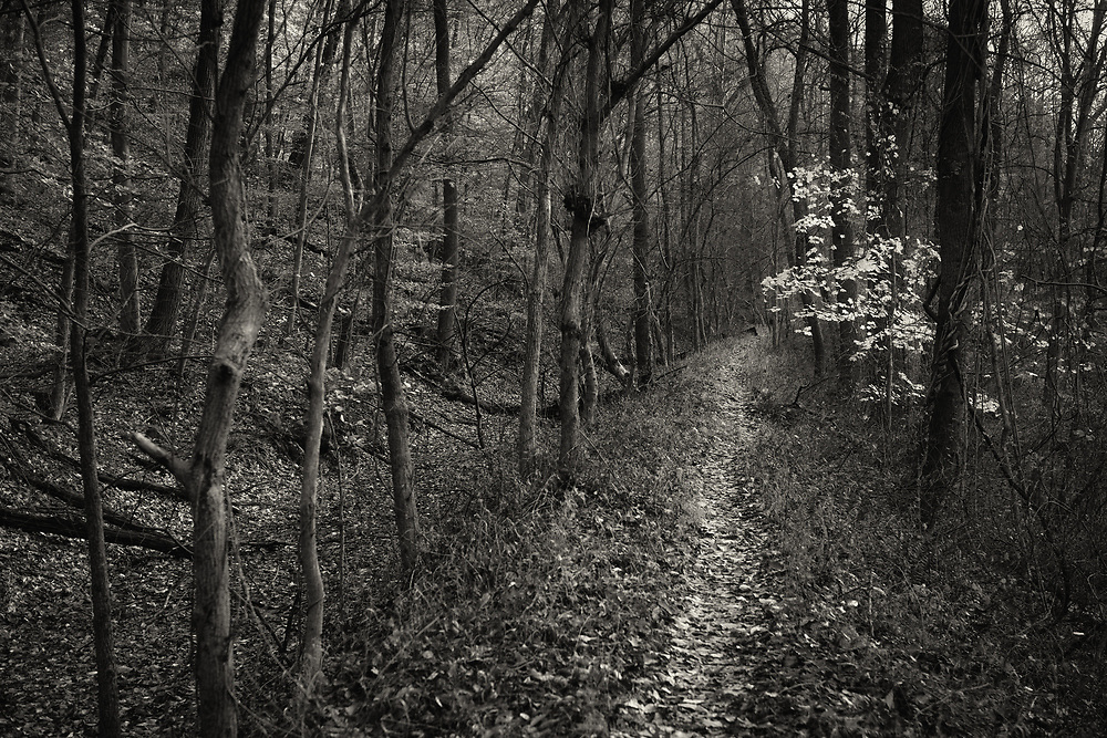 Last leaves on the Mill Race Trail in Oella, Maryland.
