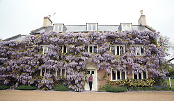 © Licensed to London News Pictures. 07/05/2014. Wells, UK A woman stands underneath a display of Wisteria in Wells, Somerset. Photo credit : Jason Bryant/LNP