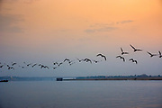 A flock of birds flies over the Ganges River at sunset at Varanesi, Uttar Pradesh, India