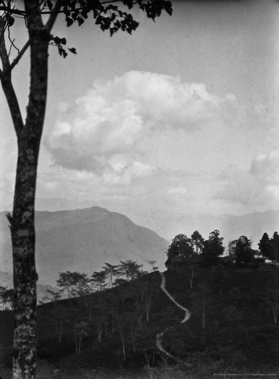 View of Mountains and Tea Gardens on the Way to Siliguri, India, 1929