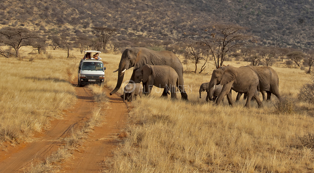 A family of African Elephants meets with the tourists in Samburu National Reserve, Kenya.
