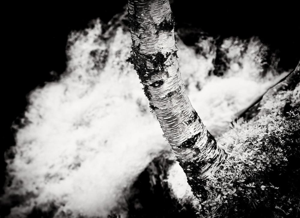 Norway - Tree by glacier river BW