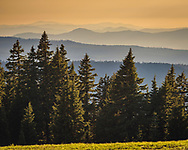 Evergreen trees and forested ridges seen from Crater Lake National Park, Oregon