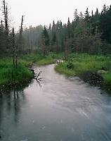 Morning mist as Scott Stream enters Scott Bog