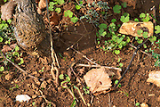 vineyard soil sample clos des langres ardhuy nuits-st-georges cote de nuits burgundy france