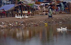 September 23, 2016 - Lahore, Punjab, Pakistan - Pakistani gypsy family life at the bank of river ravi in Lahore. (Credit Image: © Rana Sajid Hussain/Pacific Press via ZUMA Wire)