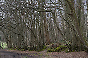 Woodland in the East Sussex countryside near Hartfield, England, United Kingdom.