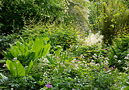 Astrantia and Astilbe in the Dingle water garden at Stockton Bury Gardens, Leominster, Herefordshire, UK