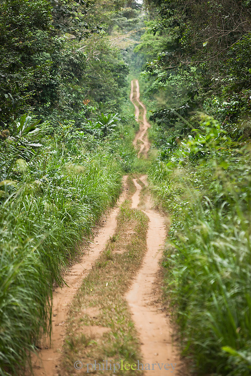 Forest track, Ombo Village.