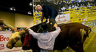 Omaha, Neb 5/6/06 Warren Buffet climbs a bull at the Justin Boots booth on the floor at the Berkshire Hathaway annual meeting in the Qwest Center Omaha Saturday Morning..(Chris Machian/Prairie Pixel Group)