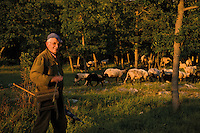 Sheep herd (with few goats) in the Bastasi area (and shepherd Milan). Few people that living in the middle-northern side of the vst plain. Livansko Polje -  karst plateau: arguably the largest karst field in the world. This is an area that was affected by Balkan war (1991-1995) Livansko. May 2009. <br /> Bosnia-Herzegovina. <br /> Model release form not available: I was alone and the local people spaeking local language only.<br /> Elio della Ferrera / Wild Wonders of Europe