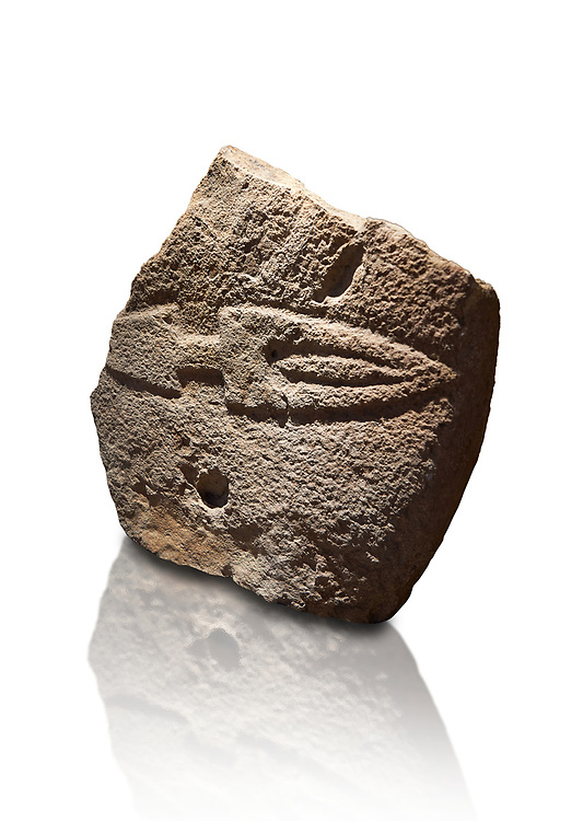 Fragmant of a Late European Neolithic prehistoric Menhir standing stone with carving of a knife on its face side.  Excavated from Palas de Nuraxi II, Laconi. Menhir Museum, Museo della Statuaria Prehistorica in Sardegna, Museum of Prehoistoric Sardinian Statues, Palazzo Aymerich, Laconi, Sardinia, Italy. White background. .<br /> <br /> Visit our PREHISTORIC PLACES PHOTO COLLECTIONS for more photos to download or buy as prints https://funkystock.photoshelter.com/gallery-collection/Prehistoric-Neolithic-Sites-Art-Artefacts-Pictures-Photos/C0000tfxw63zrUT4