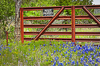 Wildflowers were not abundant this year in the Texas Hill Country although I did find this rusted metal fence with a Private Property No Tresspassing sign in front of a small patch of wildflowers and bluebonnets.