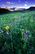 Wildflowers below Kiyo Crag in summer. Badger-Two Medicine Roadless Area in the Rocky Mountain Front. Lewis & Clark National Forest, Montana
